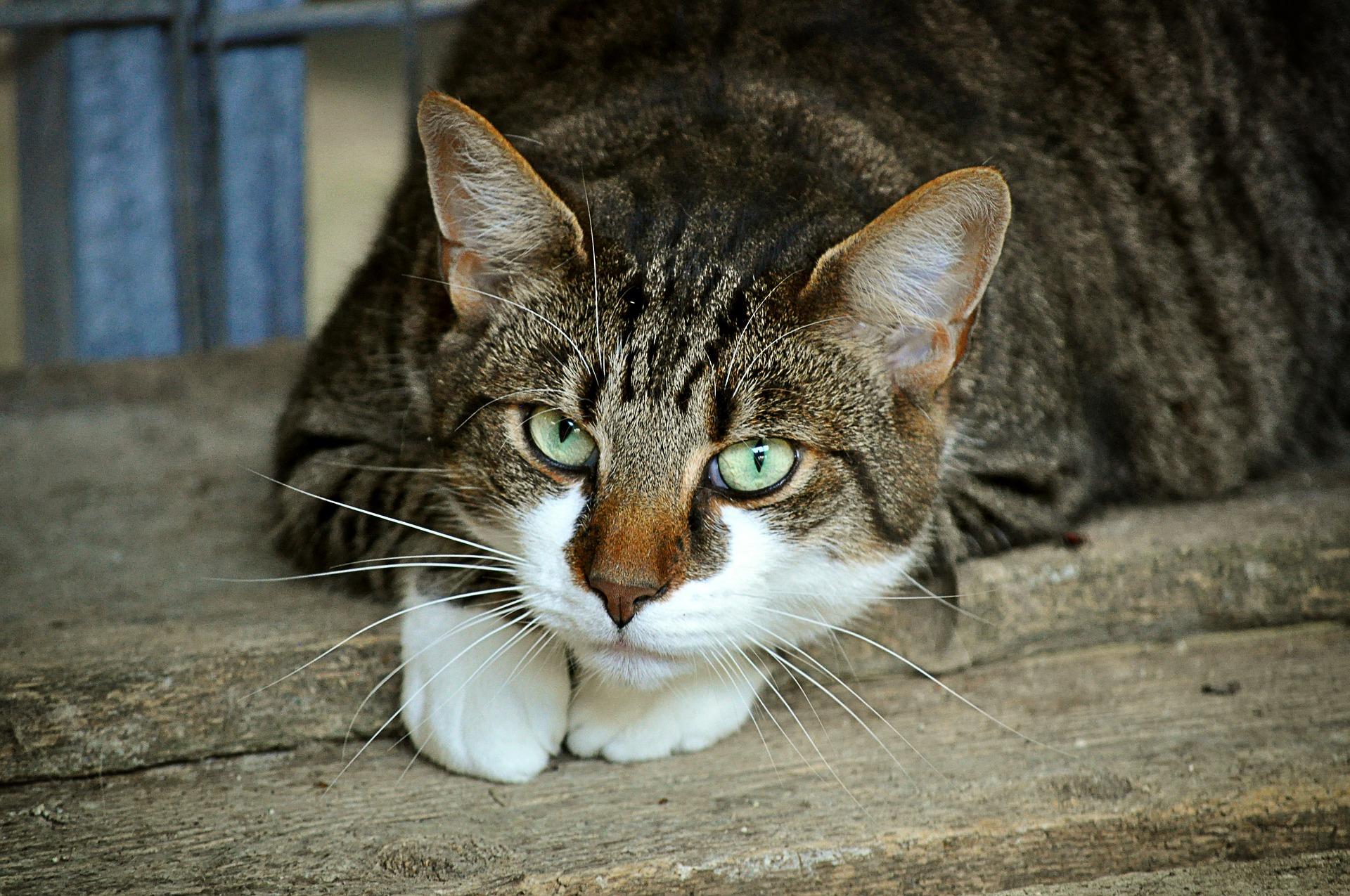 Tierheim Düren Katzen