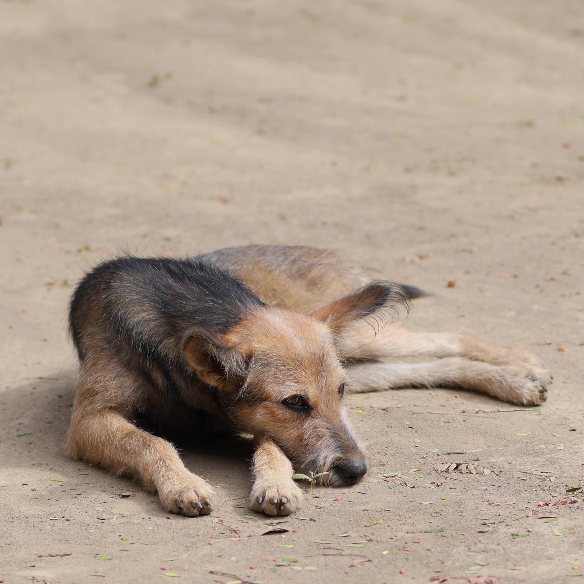 Tierheim Düren Hunde